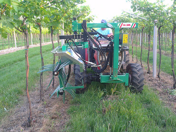 C0096 Vine shoot tipping machine with 2 rolls, the max height 1,20 mt